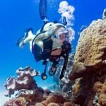 Cairns dive