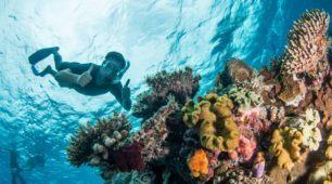 great barrier reef snorkel