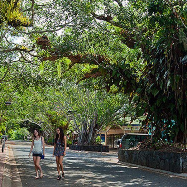 Beautiful tree-lined Kuranda township